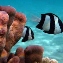 Information transfer on coral reefs