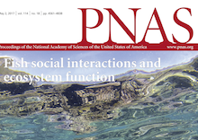 Coral reef work featured on PNAS cover